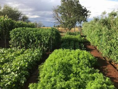 Our very own vegetable garden -